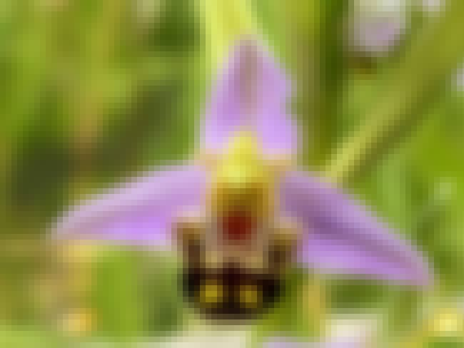 This Orchid      is listed (or ranked) 1 on the list 60+ Everyday Objects That Look Really Happy